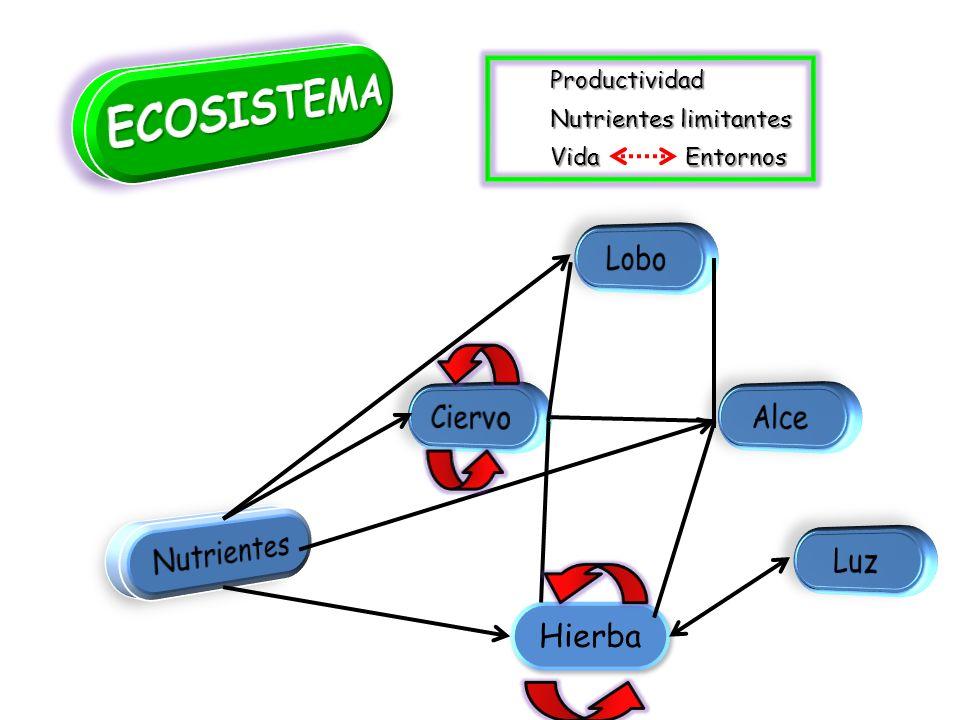 ECOSISTEMA Lobo Ciervo Alce Nutrientes Luz Hierba Productividad