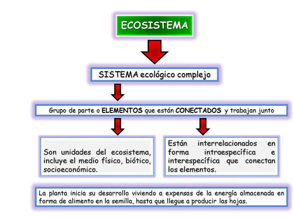 ECOSISTEMA SISTEMA ecológico complejo