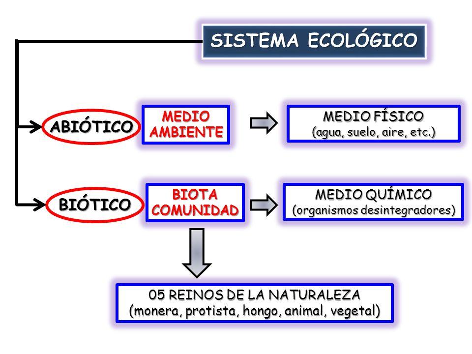 SISTEMA ECOLÓGICO ABIÓTICO BIÓTICO MEDIO AMBIENTE MEDIO FÍSICO BIOTA
