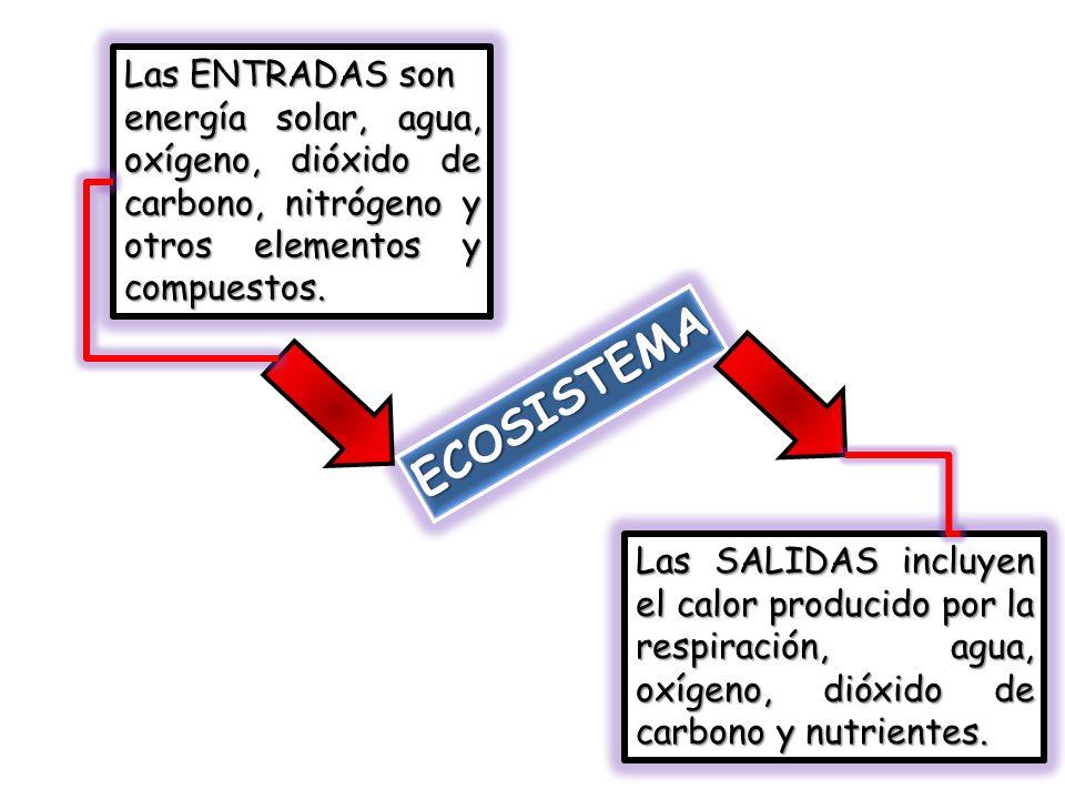 ECOSISTEMA Las ENTRADAS son