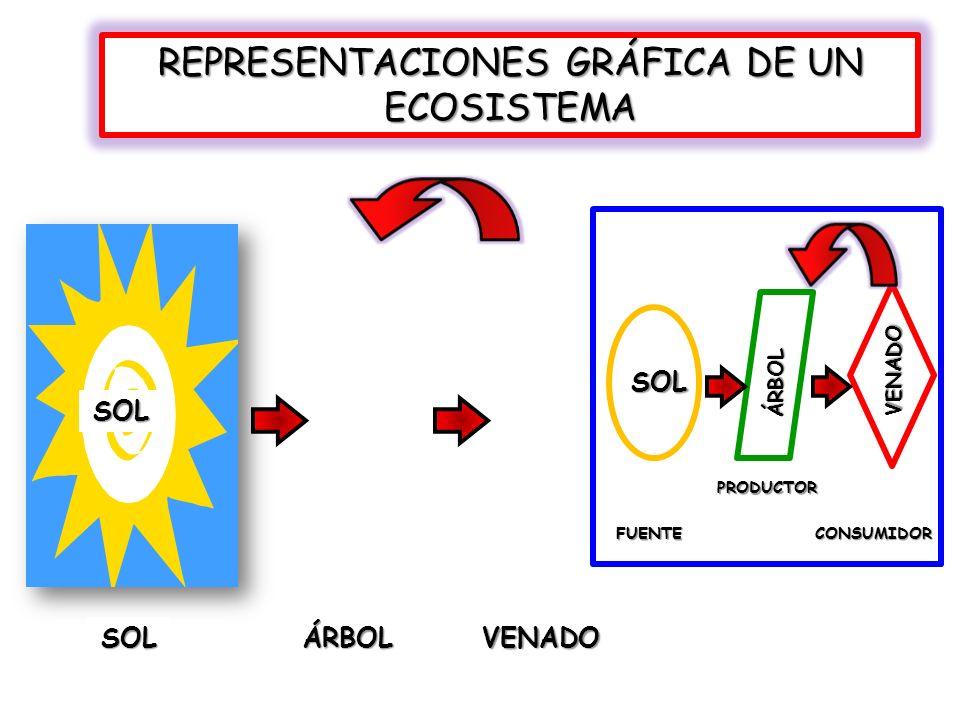REPRESENTACIONES GRÁFICA DE UN ECOSISTEMA
