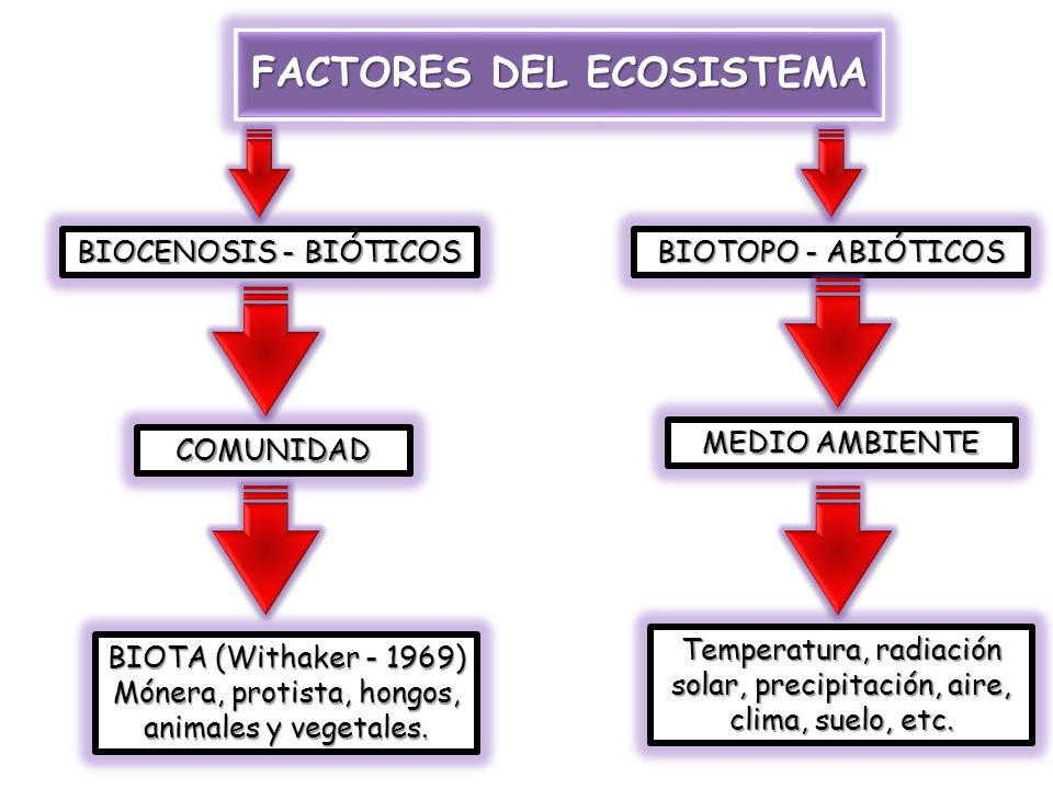 FACTORES DEL ECOSISTEMA