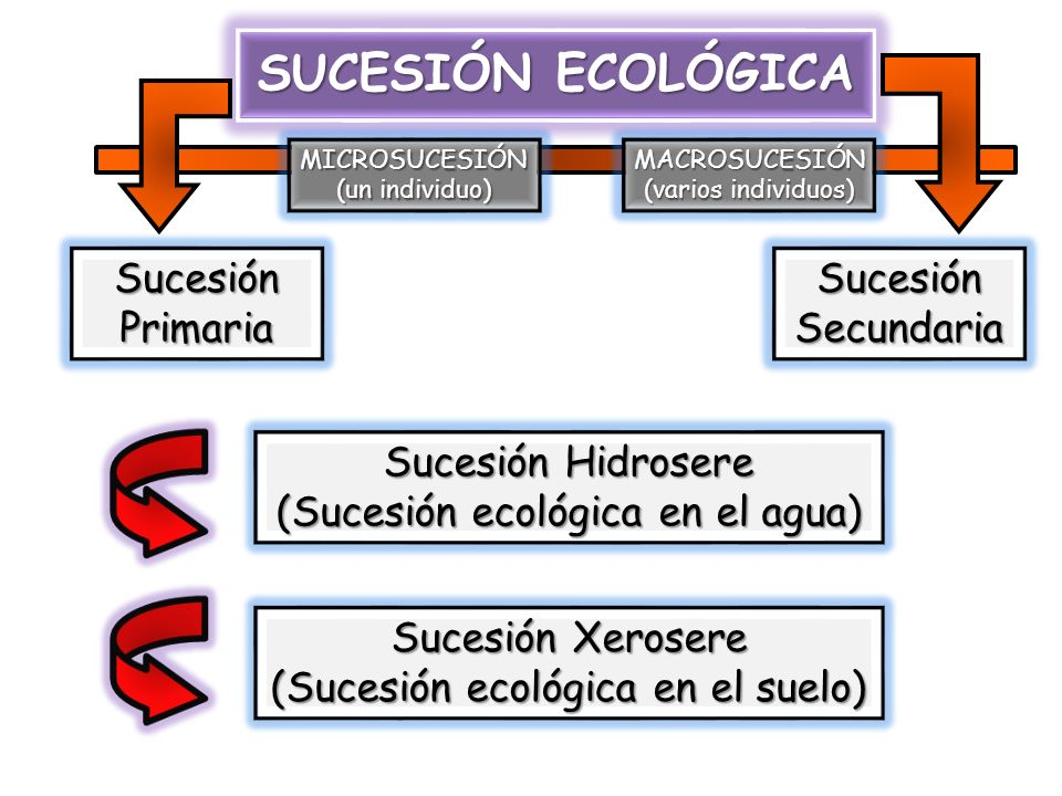 SUCESIÓN ECOLÓGICA Sucesión Primaria Sucesión Secundaria