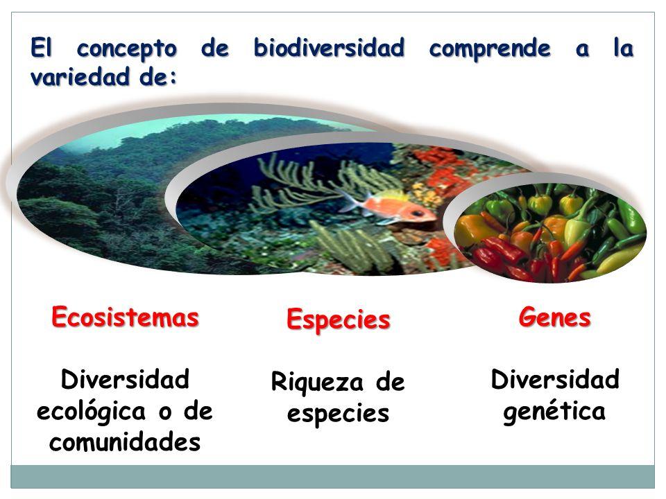 Diversidad ecológica o de comunidades