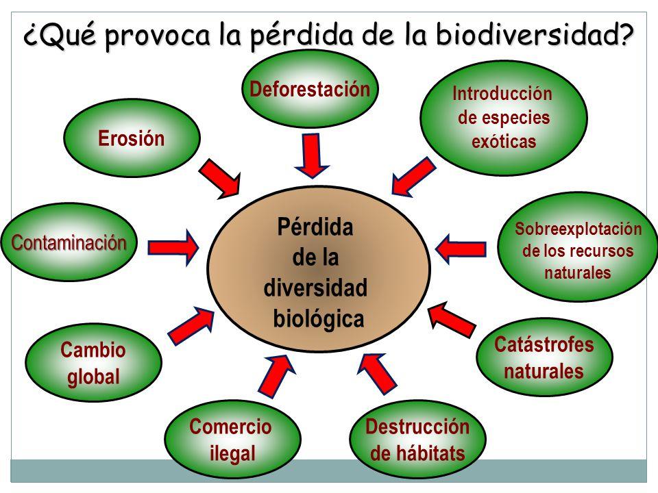 ¿Qué provoca la pérdida de la biodiversidad