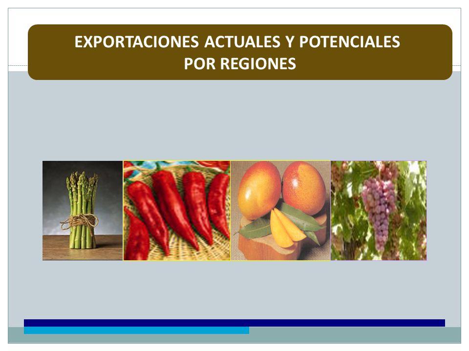 EXPORTACIONES ACTUALES Y POTENCIALES