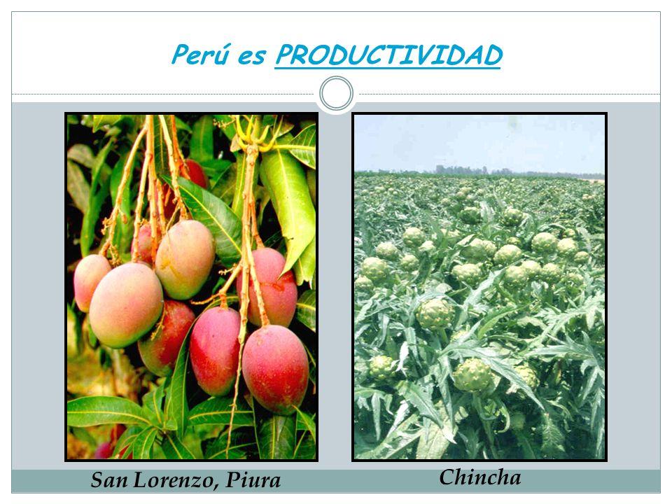 Perú es PRODUCTIVIDAD San Lorenzo, Piura Chincha