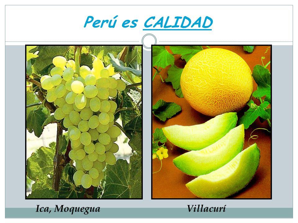 Perú es CALIDAD Ica, Moquegua Villacurí