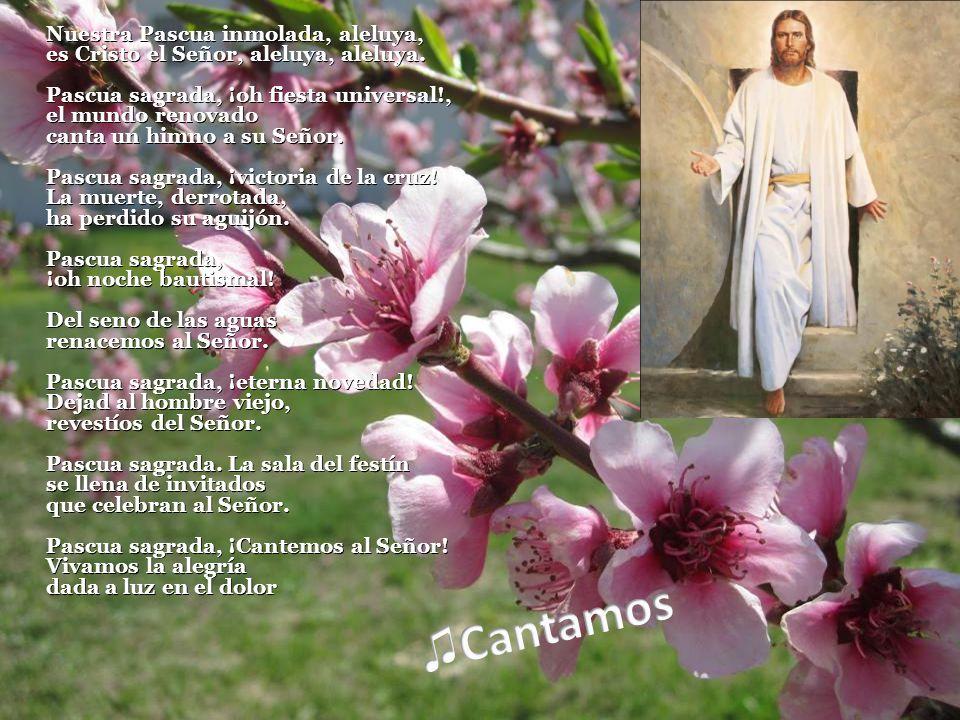 Nuestra Pascua inmolada, aleluya, es Cristo el Señor, aleluya, aleluya