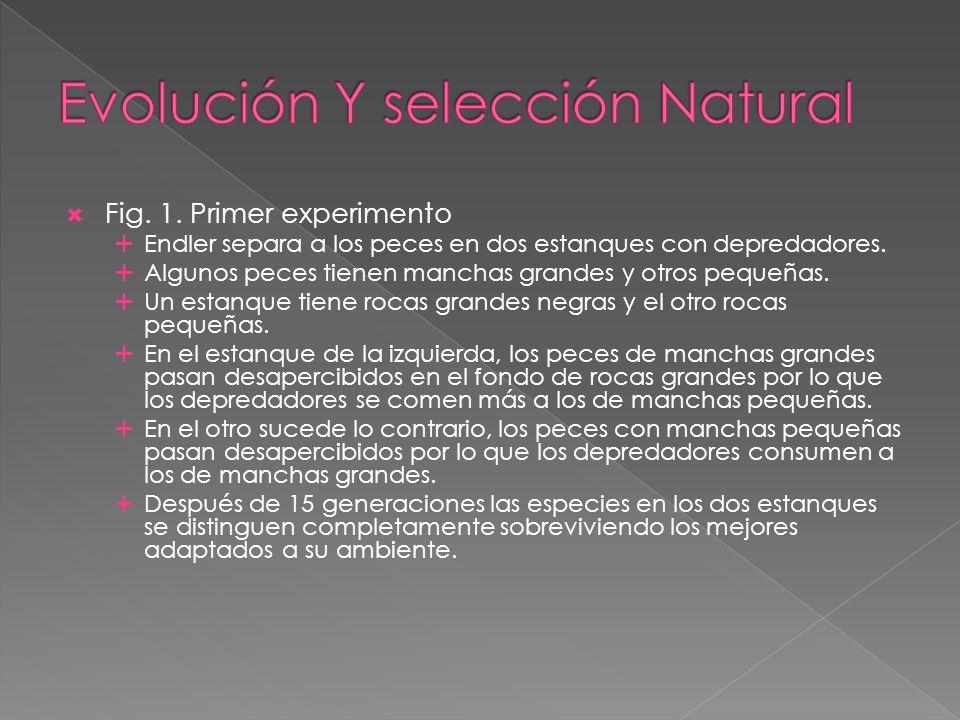 Evolución Y selección Natural