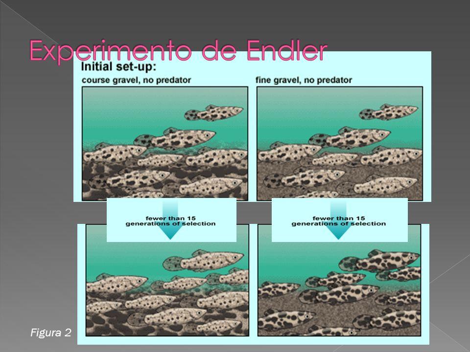 Experimento de Endler Figura 2