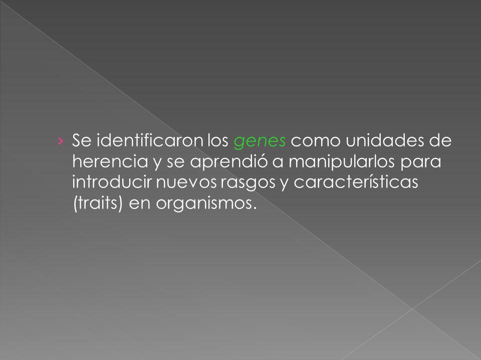 Se identificaron los genes como unidades de herencia y se aprendió a manipularlos para introducir nuevos rasgos y características (traits) en organismos.