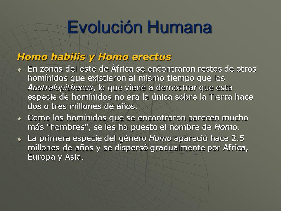 Evolución Humana Homo habilis y Homo erectus