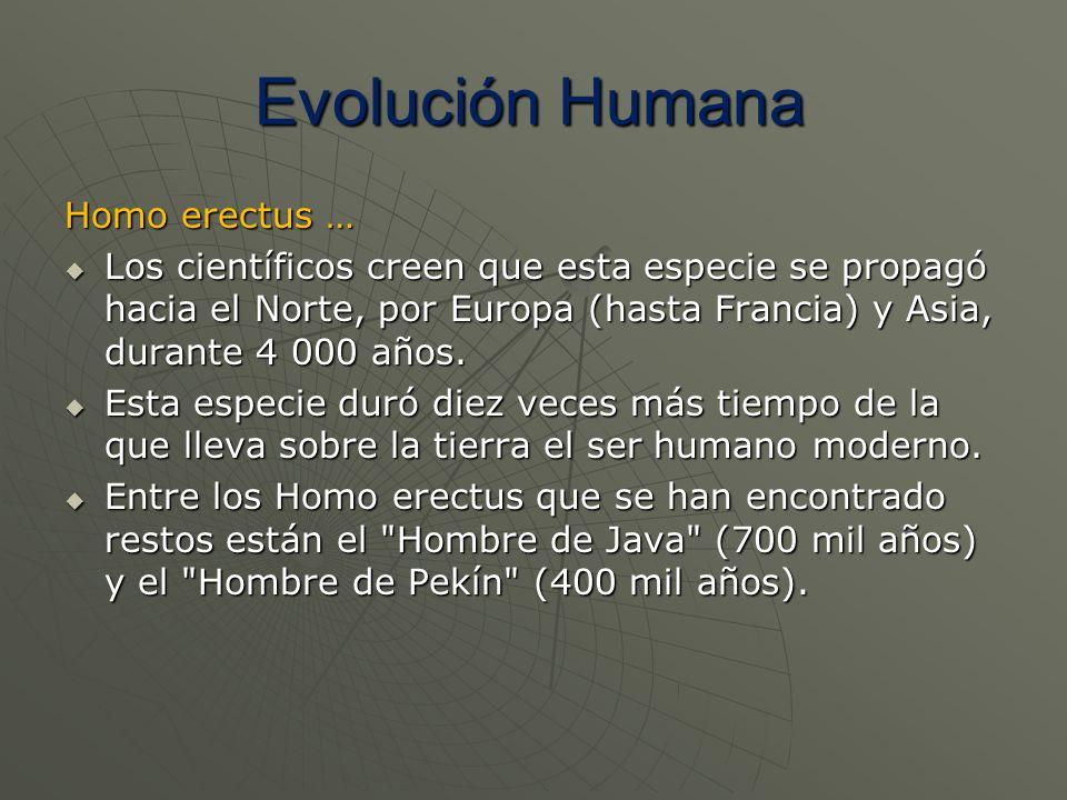 Evolución Humana Homo erectus …
