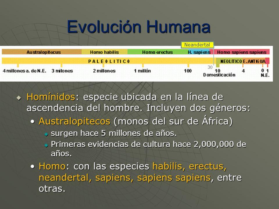 Evolución Humana Neandertal. 30. Homínidos: especie ubicada en la línea de ascendencia del hombre. Incluyen dos géneros: