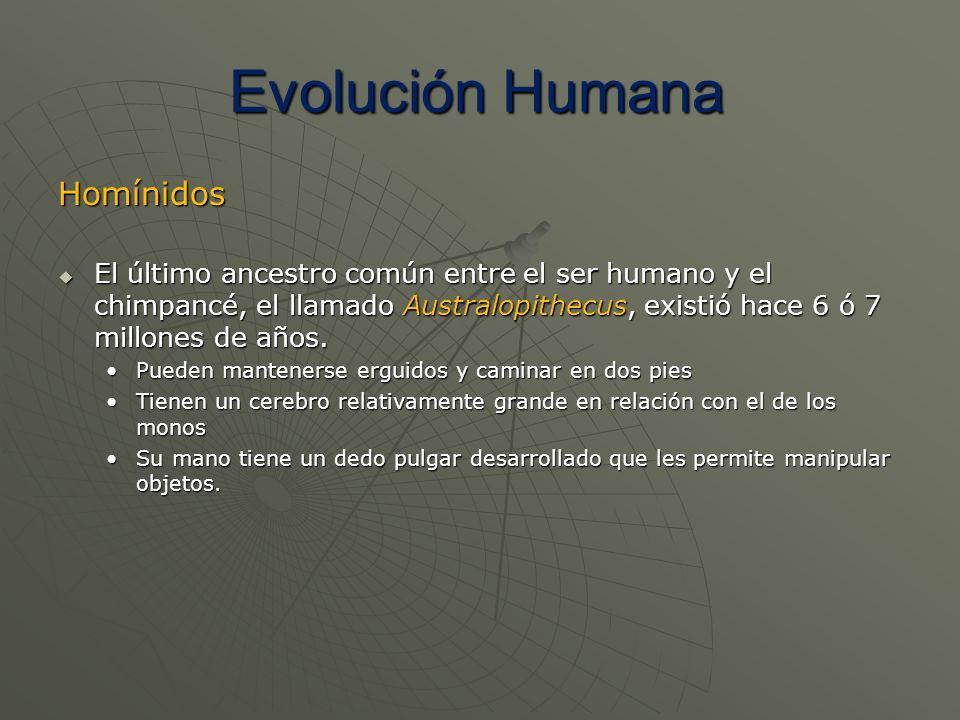 Evolución Humana Homínidos