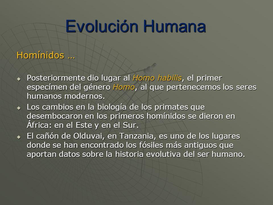 Evolución Humana Homínidos …