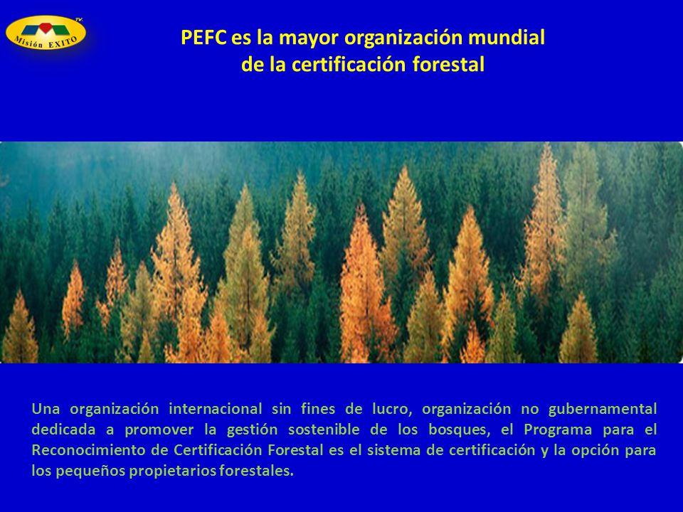 PEFC es la mayor organización mundial de la certificación forestal