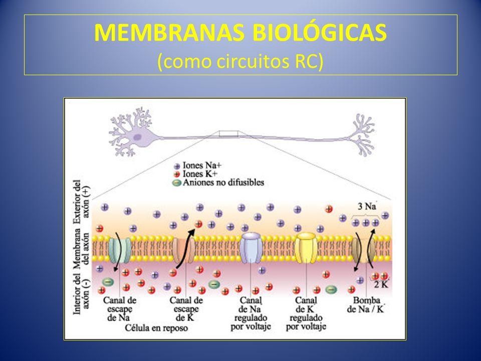 MEMBRANAS BIOLÓGICAS (como circuitos RC)