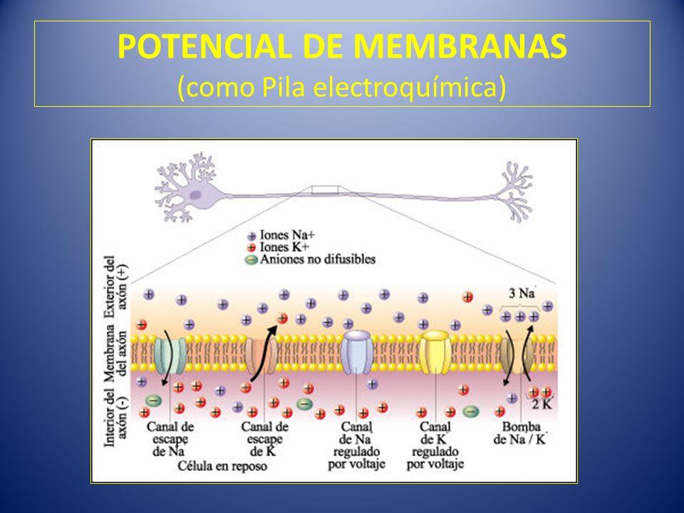 POTENCIAL DE MEMBRANAS (como Pila electroquímica)