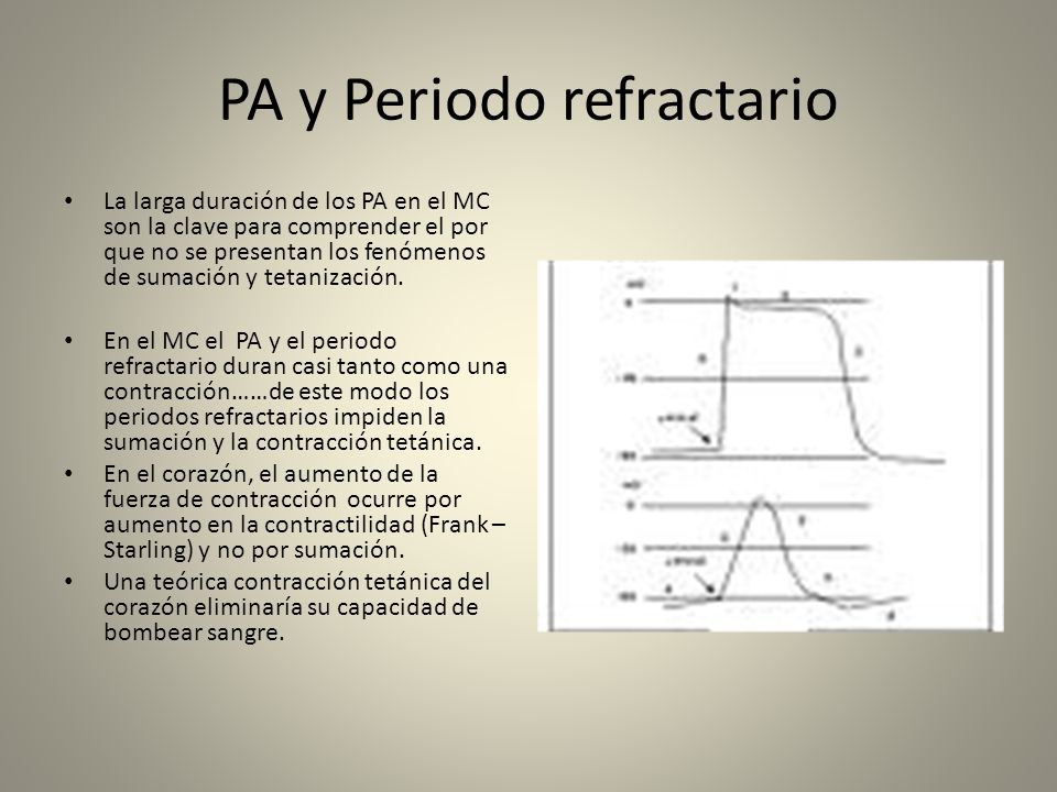 PA y Periodo refractario