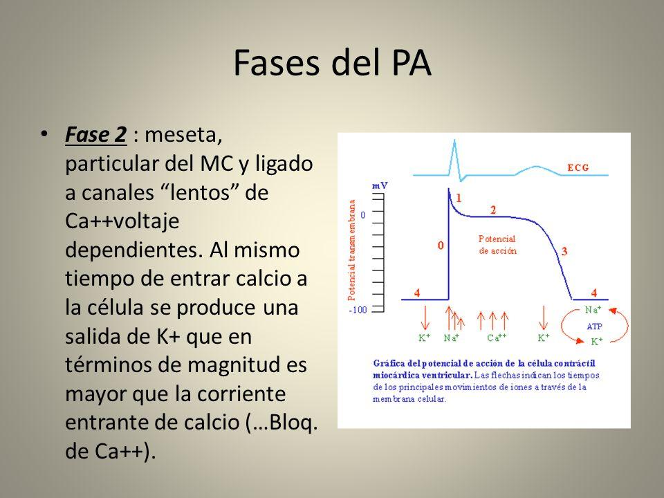 Fases del PA