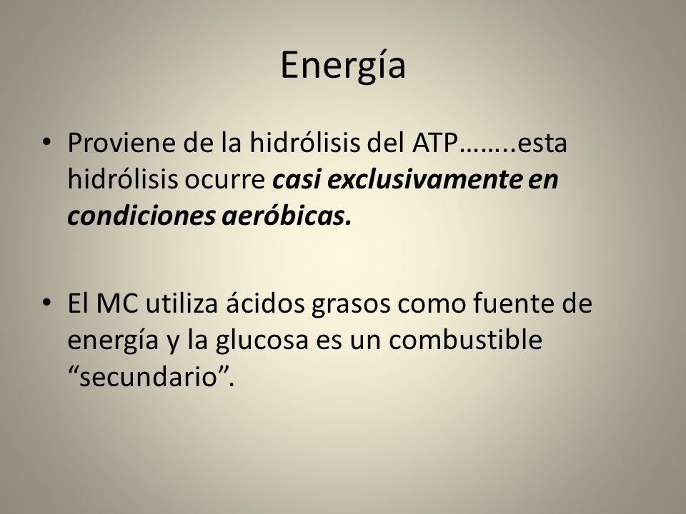 Energía Proviene de la hidrólisis del ATP……..esta hidrólisis ocurre casi exclusivamente en condiciones aeróbicas.