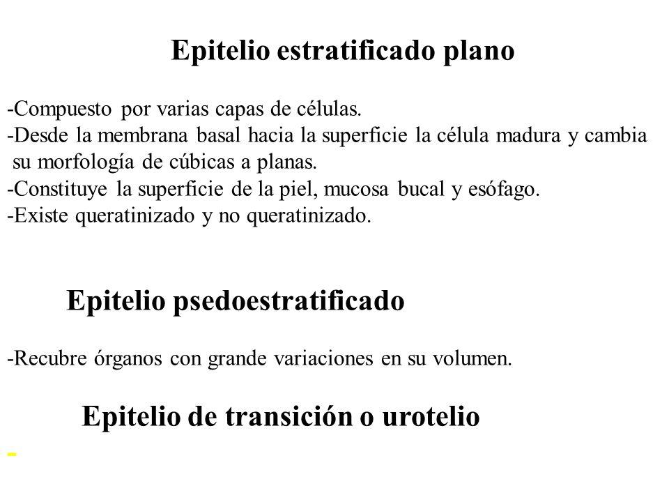 Epitelio estratificado plano