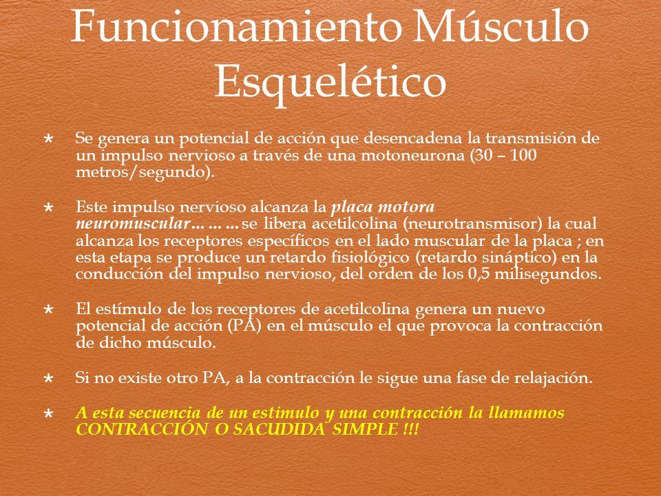 Funcionamiento Músculo Esquelético