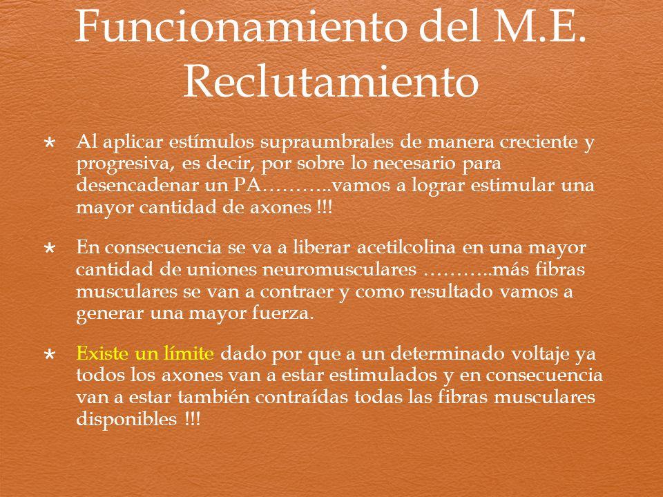 Funcionamiento del M.E. Reclutamiento