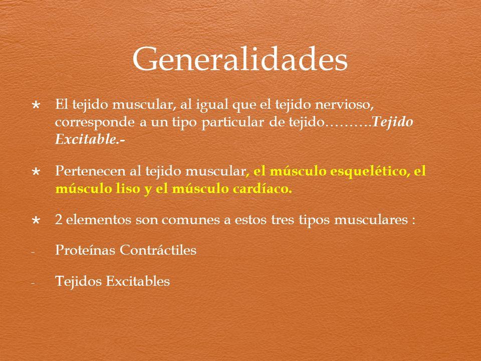 Generalidades El tejido muscular, al igual que el tejido nervioso, corresponde a un tipo particular de tejido……….Tejido Excitable.-