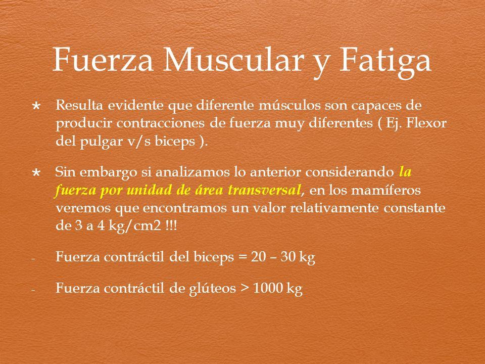 Fuerza Muscular y Fatiga