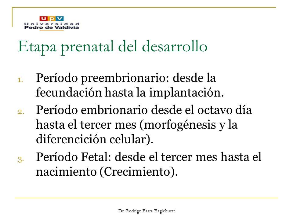 Etapa prenatal del desarrollo