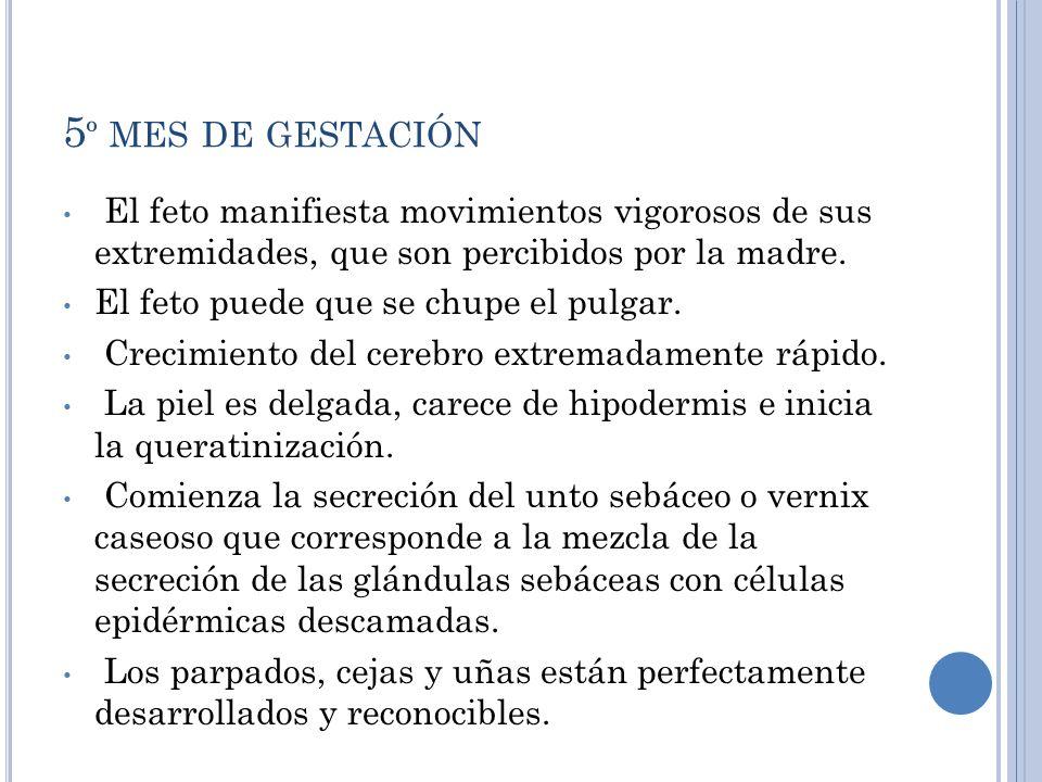 5º mes de gestaciónEl feto manifiesta movimientos vigorosos de sus extremidades, que son percibidos por la madre.