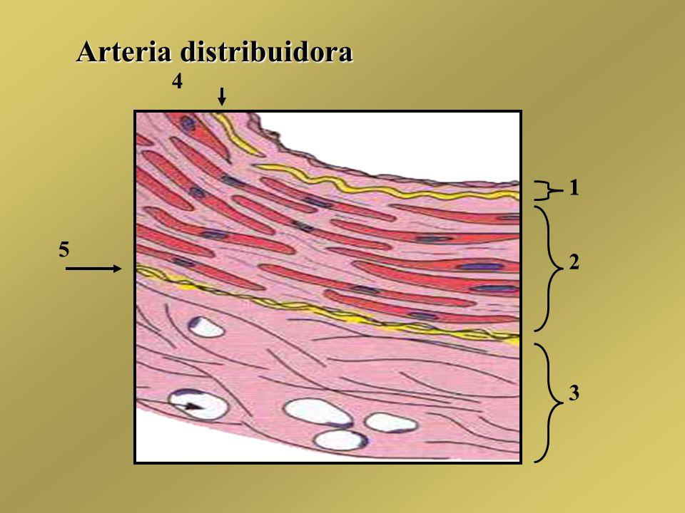 Arteria distribuidora