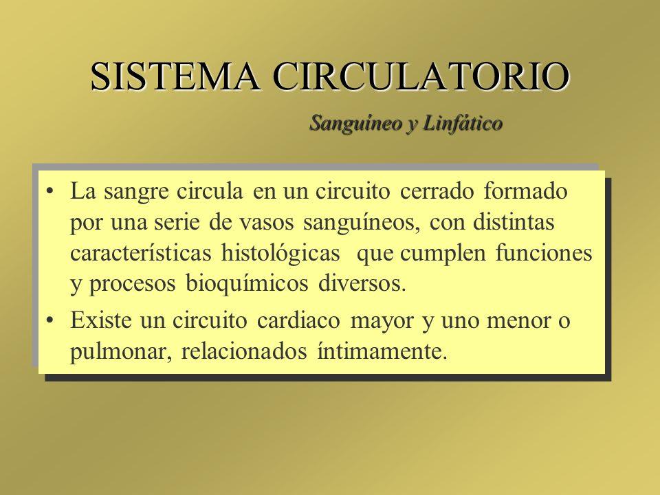 SISTEMA CIRCULATORIO Sanguíneo y Linfático.