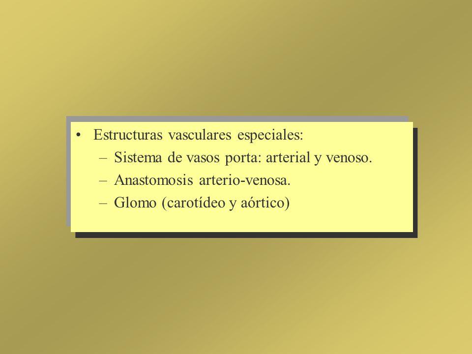 Estructuras vasculares especiales: