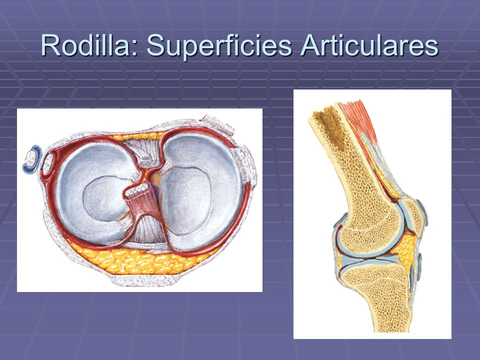 Rodilla: Superficies Articulares