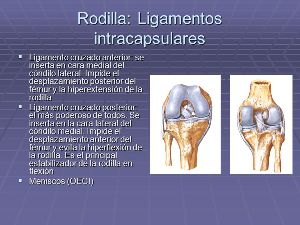 Rodilla: Ligamentos intracapsulares