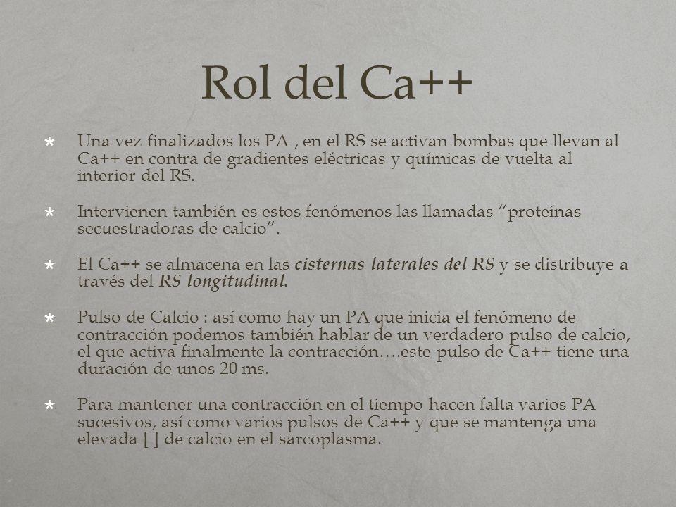 Rol del Ca++