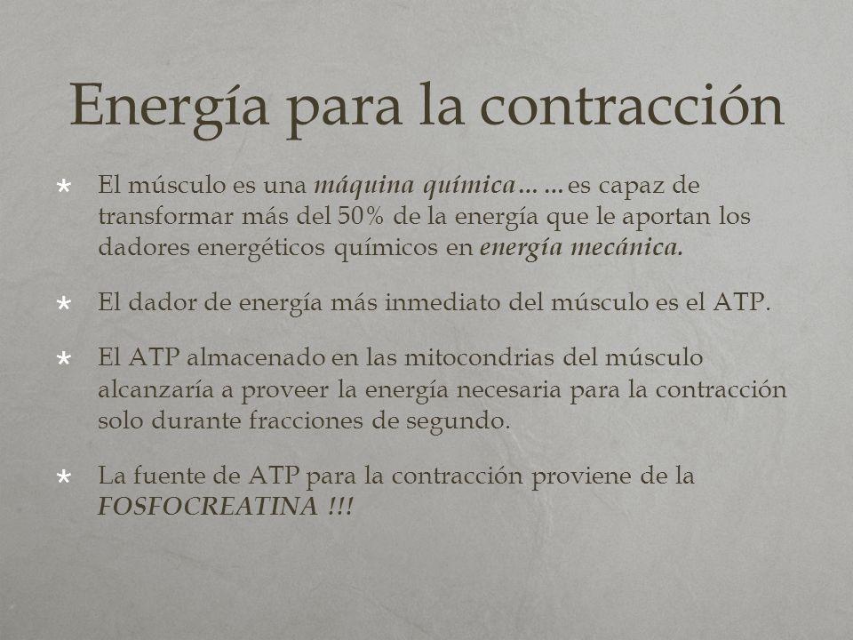 Energía para la contracción
