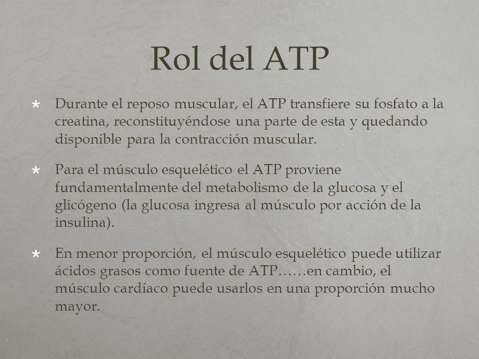 Rol del ATP