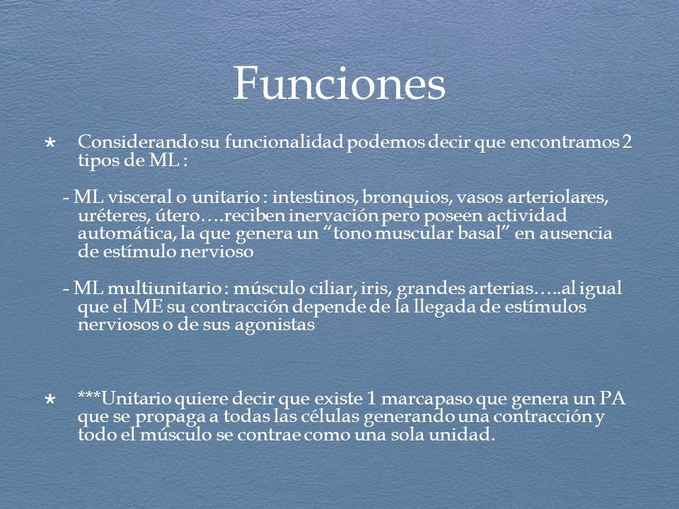Funciones Considerando su funcionalidad podemos decir que encontramos 2 tipos de ML :