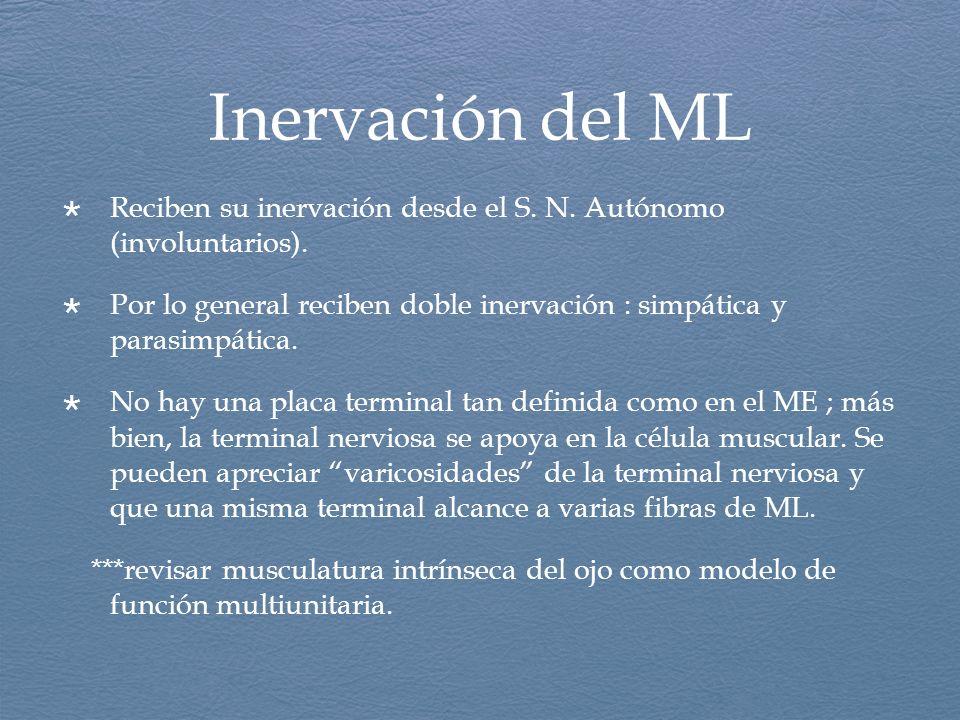 Inervación del ML Reciben su inervación desde el S. N. Autónomo (involuntarios).