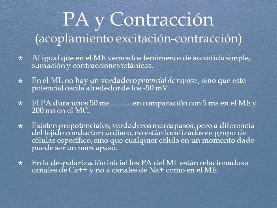 PA y Contracción (acoplamiento excitación-contracción)