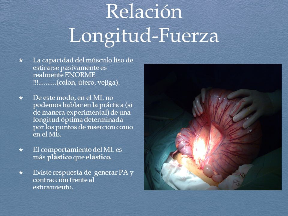 Relación Longitud-Fuerza