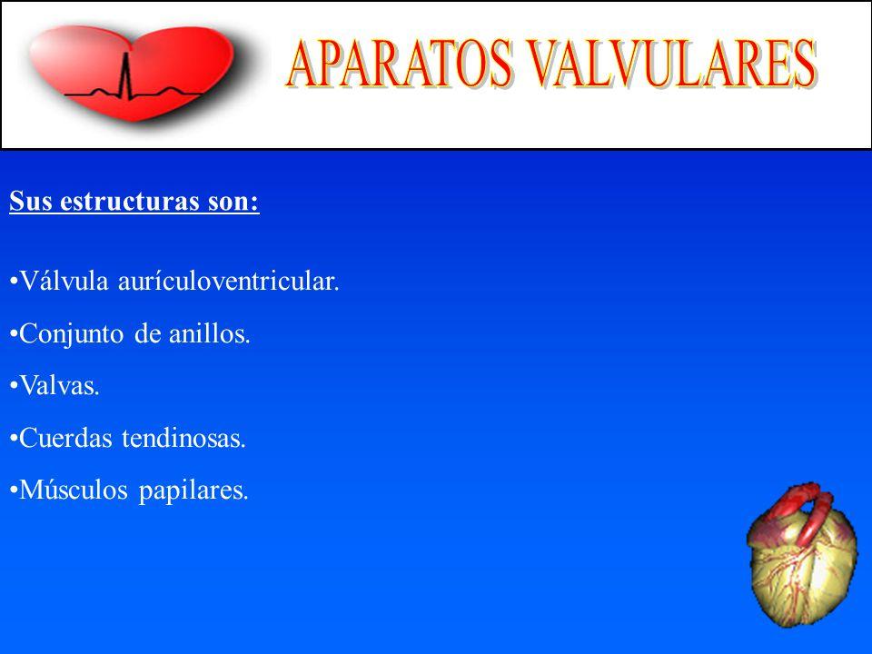 APARATOS VALVULARES Sus estructuras son: Válvula aurículoventricular.