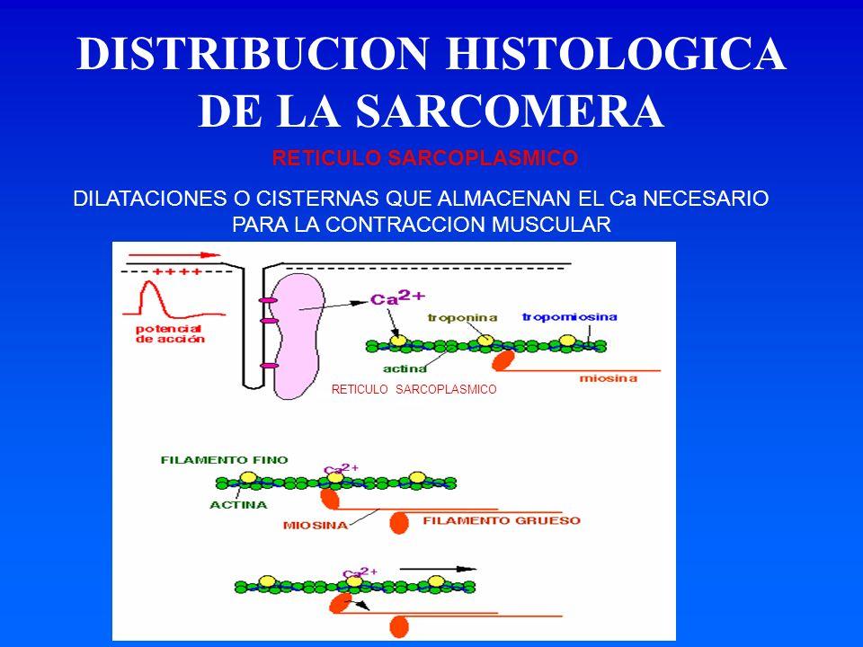 DISTRIBUCION HISTOLOGICA DE LA SARCOMERA