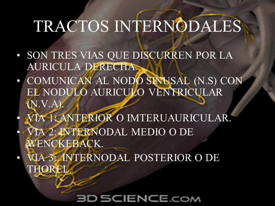 TRACTOS INTERNODALESSON TRES VIAS QUE DISCURREN POR LA AURICULA DERECHA. COMUNICAN AL NODO SINUSAL (N.S) CON EL NODULO AURICULO VENTRICULAR (N.V.A).