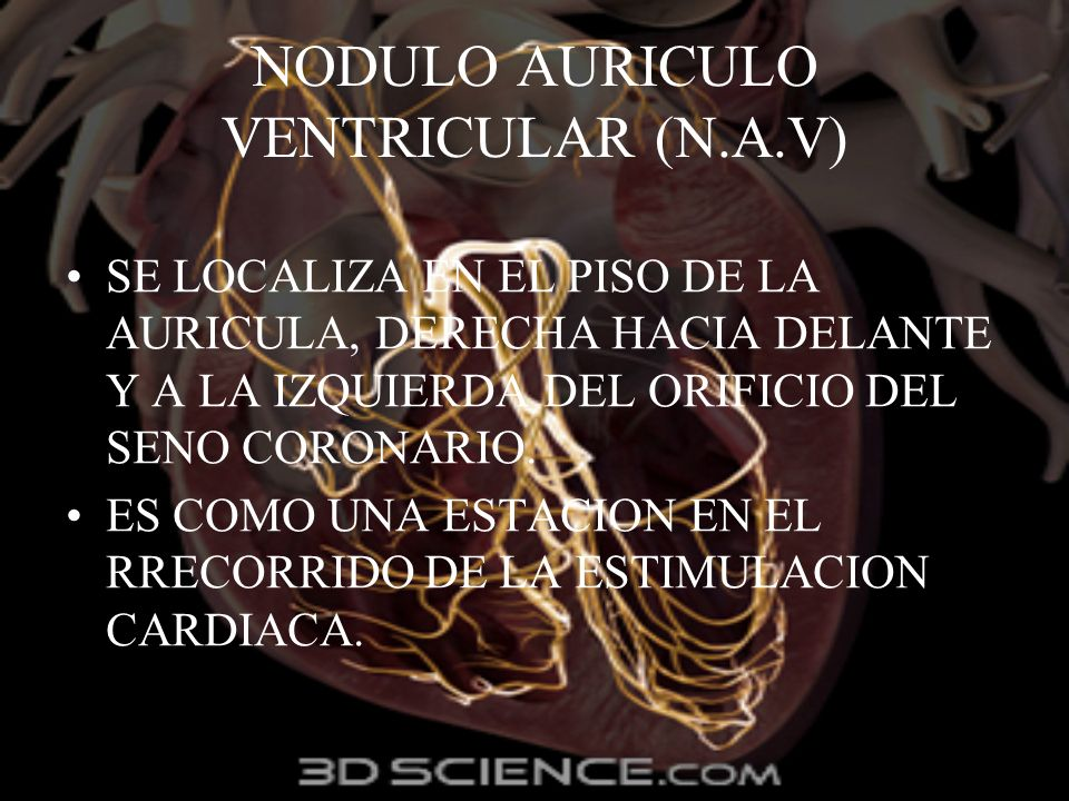 NODULO AURICULO VENTRICULAR (N.A.V)